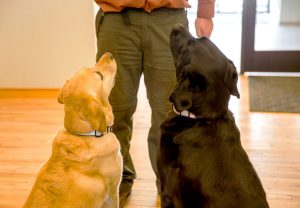 office dogs Avy & Sydney at Big Storm office in Bozeman, MT