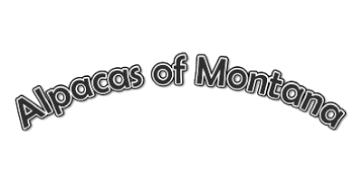 Quiq logo
